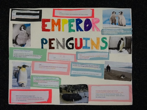 Penguin Projects Second Grade Room 116miss Coughlinmrs